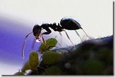 220px-Ant