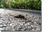 Dead_grasshopper_1