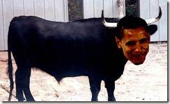 bull[1]
